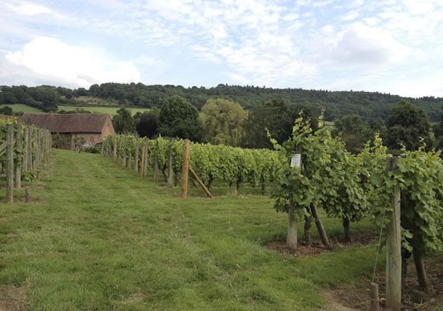 Coddington Vineyard - English white wine